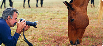 Wildlife and Horse Photography Venue